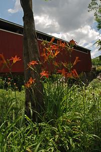 Tiger Lilies at the Bridge