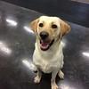 We love smiling pups !