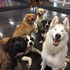 It's all happy pups today in Enriched Daycare !