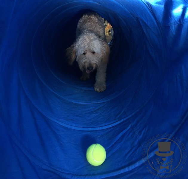 Tunnel time with Goldie