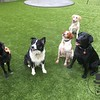 What a fun little group we had today! Bess, Gus, Mazie, Sophie and crazy Kai!