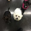 Benny, Button and Bandit want some treats!!