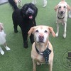 Asher, Bailey, Sophie, and Tula!