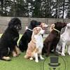 Snickerdoodle, Kai, Tula, Asher, Loki, and Petie
