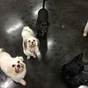 Olivia, Rosie, Benny and Talisker!