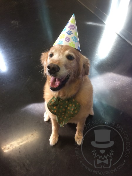 Biscuit's perfect smile for cake!