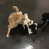 PUPPY WRESTLE MANIA!