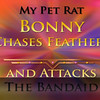 This my Bonny rat in the longer version, chasing feathers and saving me from the evil bandaid.