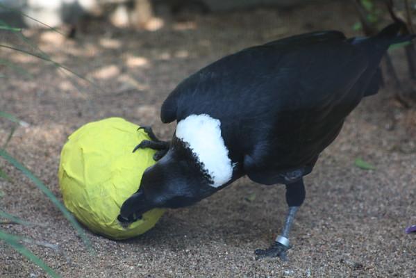 Houston Zoo Animal Enrichment