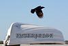 dinghy crow 112115