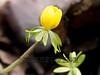 Greenbriar Wildflowers In Bloom