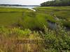 Marsh Grass Along Wings Neck Road