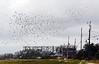 A Flock Of Birds Flies Over Mill Creek In Sandwich