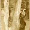 1931 Playground Circus II (01636)