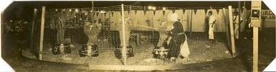 Mock Circus at Old City Stadium (02289)