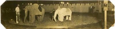 Mock Circus at Old City Stadium IV (02288)
