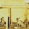 Miller Park Dog Show V (02277)