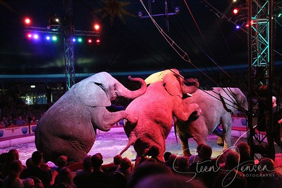 Entertainment; Shows; Cirkus Arena;