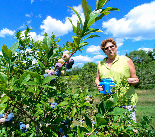 Blueberry Festival preview  - 072716
