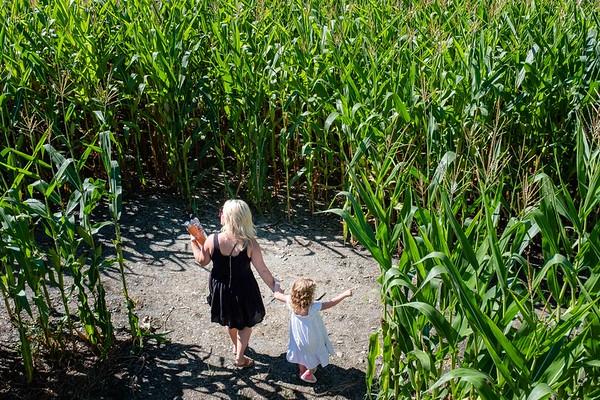 Gaines Farm Corn Maize 091518
