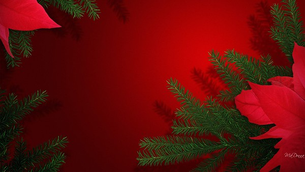 Christmas Poinsettia Tree Red Fir Limbs Holiday Xmas Season Green Winter Wallpaper Backgrounds