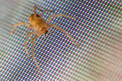 TV Spider