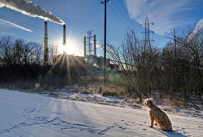 Will County coal-fired powerplant in Romeoville IL. Even the dog knows there's something evil about this place.