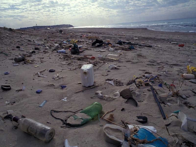חוף מזוהם.jpg