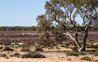 Charles Darwin reserve WA - 2431