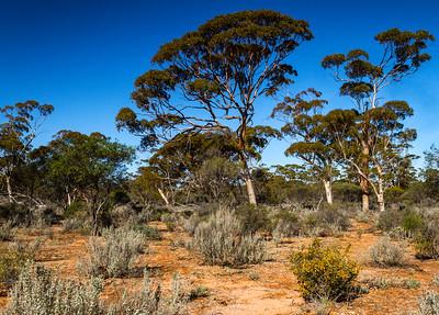 Charles Darwin Reserve WA - 2139