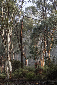 Dryandra Woodlands - 2920