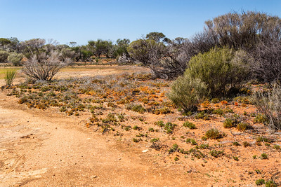 Low Granite Hill Charles Darwin reserve WA - 2403