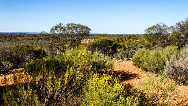 Charles Darwin Reserve WA - 2164