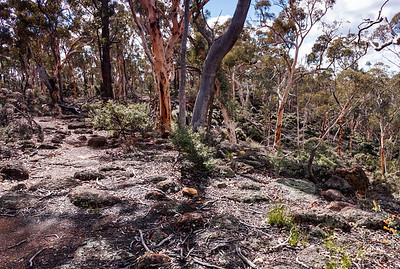 Dryandra Woodlands -4841
