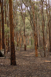 Dryandra Woodlands - 3123