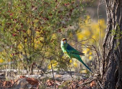 Bowra Wildlife Sancturay