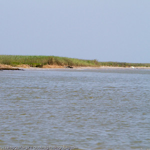 Our captains favorite fishing spot, completely unprotected, the oil was just a few hundred yards away.