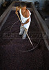 A worker dries cacao, cooperativa Cabruca, Una, Bahia, Brazil, August 6, 2009. (Austral Foto/Renzo Gostoli)