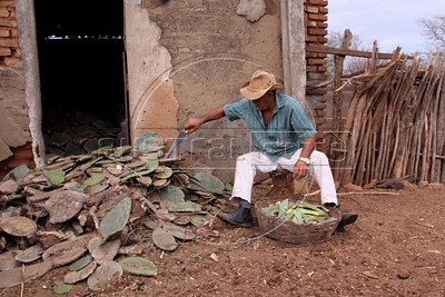 Arnoldo Lopes de Araujo slices up cactus from a recent delivery on his small farm near Sao Jose do Egito, in Pernambuco state. The semi-arid region known as the sertao has annual dry seasons, but 2012 is considered the worst in decades. Araujo cannot grow enough feed animals and pays for the cactus in order for his animals to survive. (Australfoto/Douglas Engle)