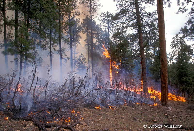 Ground Fire, Prescribed Burn, San Juan National Forest, Colorado