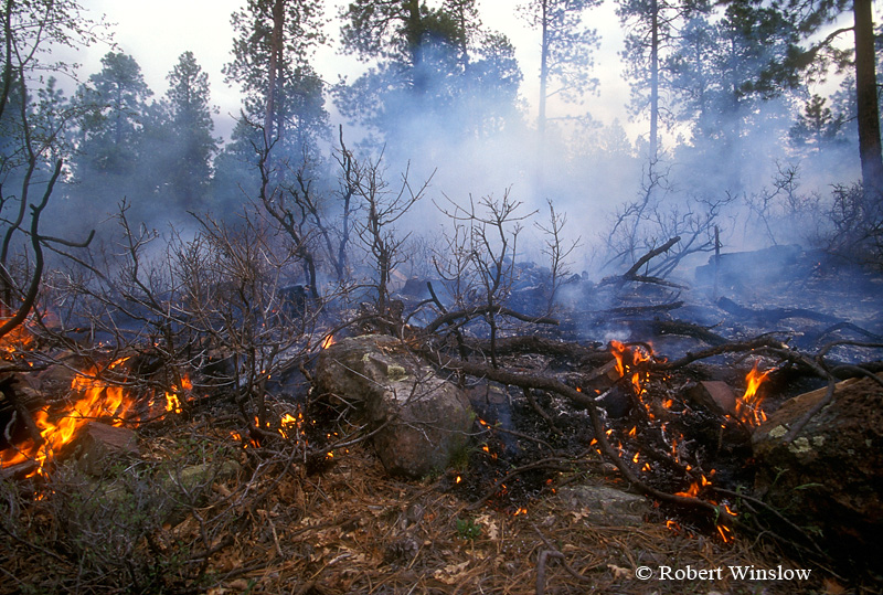 Ground Fire, Prescribed Burn, US Forest Service, San Juan National Forest, Colorado