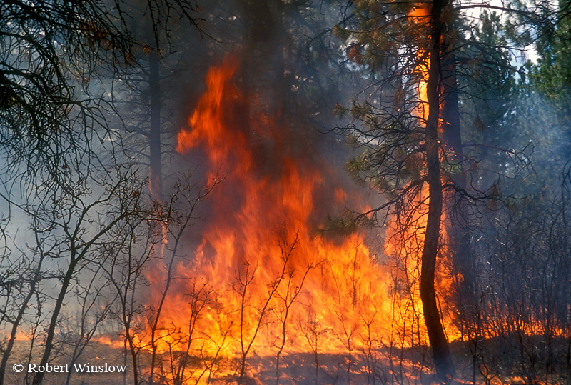 Ground Fire, Prescribed Burn, US Forest Service, San Juan National Forest, Colorado