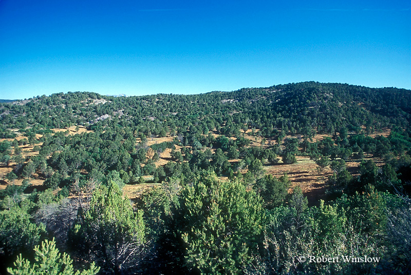 """Pinon and Juniper Trees Thinned by """"Hydro"""" Mower, Fuels Reduction and Wildlife Habitat Improvement, BLM Land near Durango, Colorado, USA, North America"""