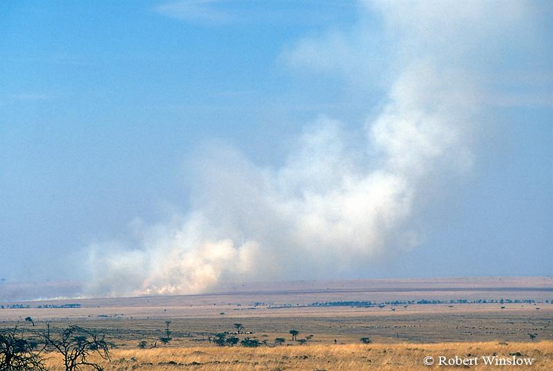 Maasai Herding Cattle in Distance, Smoke from Fires set by Maasai to clear land, Masai Mara, Kenya, Africa