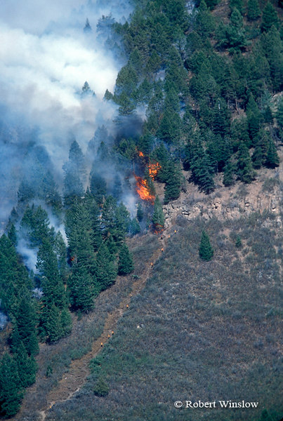 Line of Firefighters (in Yellow), Missionary Ridge Fire, 2002, San Juan National Forest near Durango, Colorado