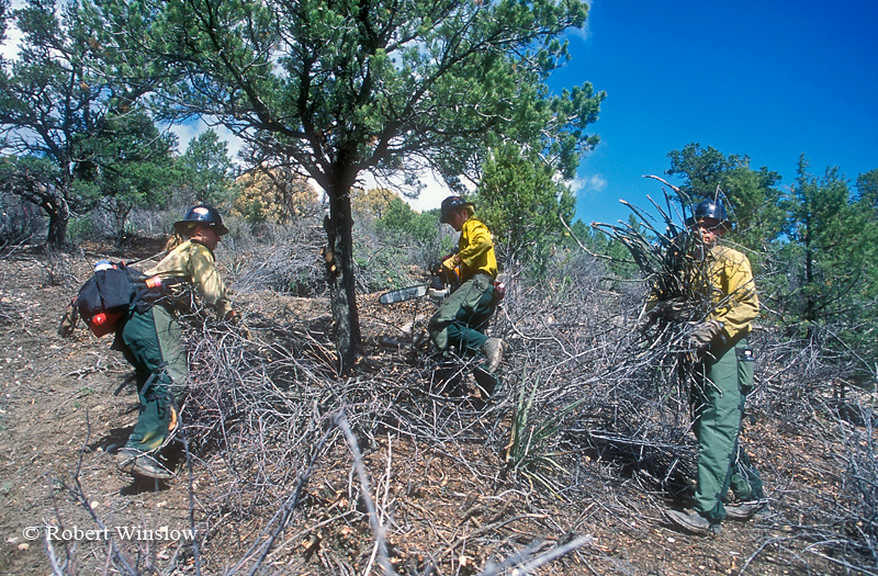 NoMR, US Forest Service Workers Thinning Forest, Fuels Reduction Prograpm, San Juan National Forest, Colorado, USA, North America