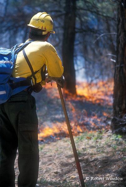 US Forest Service Worker Monitoring Ground Fire, Prescribed Burn, San Juan National Forest, Colorado