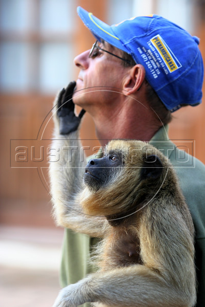 """A black howler monkey (Alouatta caraya) named """"Xica"""" touches the face of a ranch worker in the Pantanal region of Brazil's western Mato Grosso do Sul state, April 11, 2006.  The Pantanal, a 140,000 sq. km (50,000 sq. mi) seasonally flooded ecosystem which straddles the borders of Brazil, Paraguay and Bolivia, is the world's largest wetland. It is about the size of Florida, and about 24 times the size of the Everglades wetland of Florida. It is home to a known 3,500 species of plants, as well as over 650 birds, and 400 species of fish. It is a Brazilian National Heritage site, a significant site of international relevance according to the RAMSAR Wetlands Areas Convention, and a UNESCO Biosphere Reserve.(Australfoto/Douglas Engle)"""