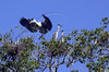 An egret takes flight in the Pantanal of Mato Grosso do sul state.(Douglas Engle/Australfoto)