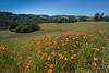 Briones Regional Park Spring
